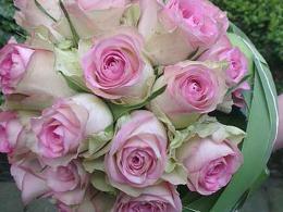 ellen-deelen-natuurlijke-bloem-creaties-bruidsboeket-biedermeier-meet-roze-roos-afgewwerkt-met-typhablad