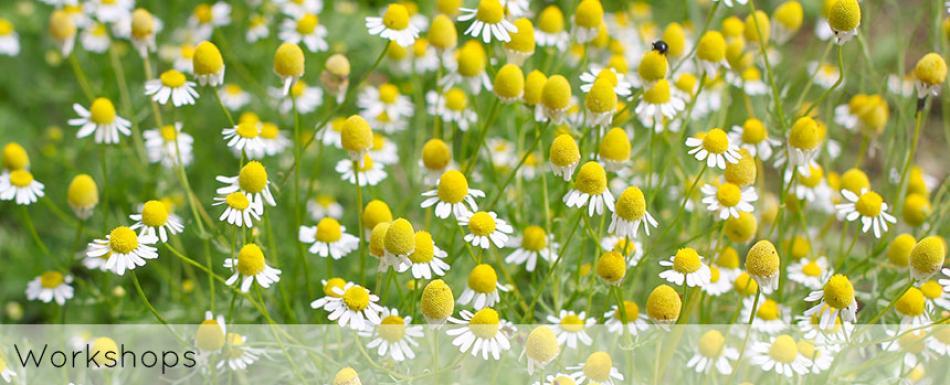 ellen-deelen-natuurlijke-bloem-creaties-achtergrond-workshops-header