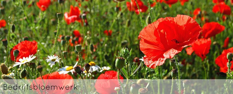 ellen-deelen-natuurlijke-bloem-creaties-achtergrond-bedrijfsbloemwerk-header